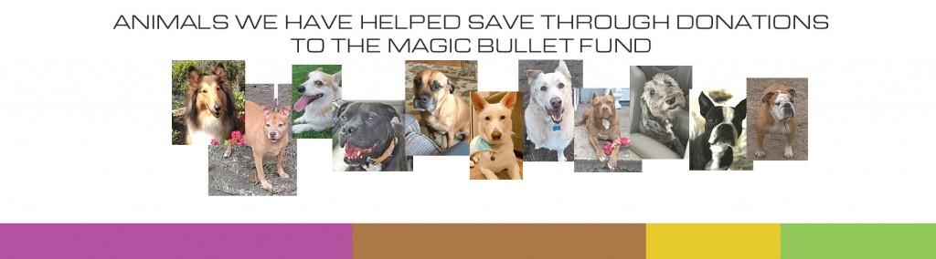animal support animals saved