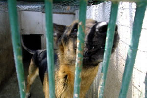 dogs-abandoned-in-the-animal-protection-granada