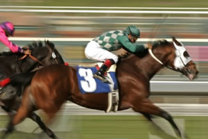 animal support horse racing