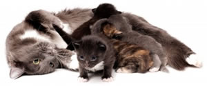 animal support kittens