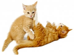 animal support kittens playing