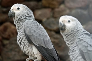 animal support parrots