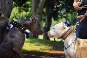 animal support pitbulls