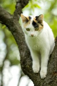 animal support cat 1