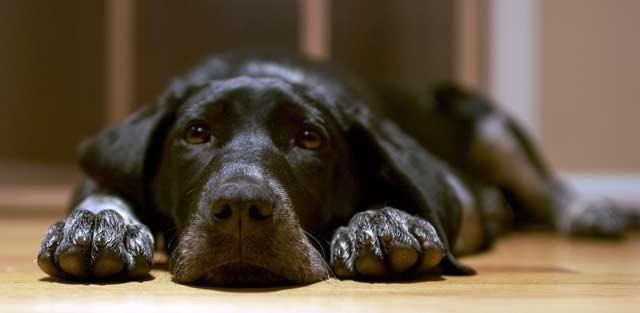 animal support dog abuse