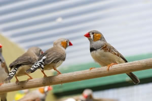 animal support finches