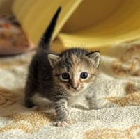 animal support kitten